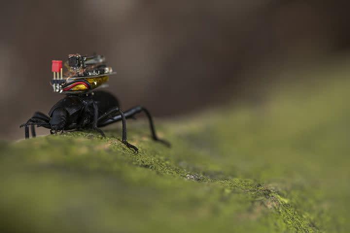 university of washington bug camera vikram and shayam discuss the challenges getting a tiny on beetle