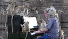 音樂也能陶冶動物性情?藝術家彈鋼琴給「猴子」聽,只為幫牠們解決困境