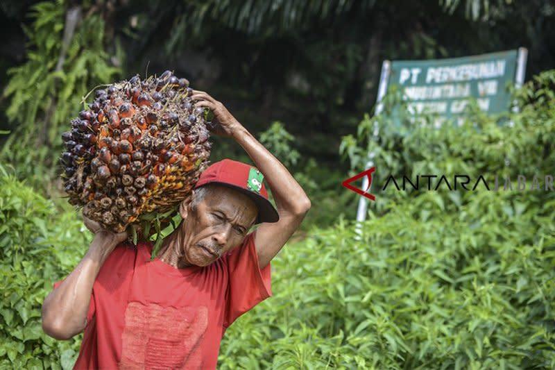 Ekspor CPO Januari anjlok hingga 35,6 persen