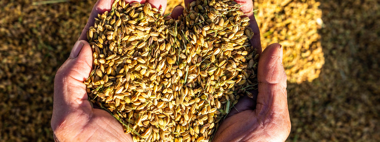 生態農村共榮 石虎的家「米」來守護