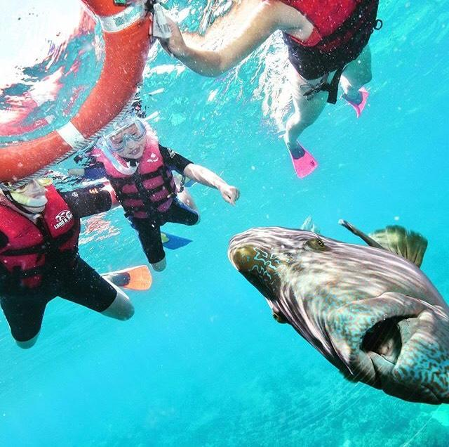 They snorkelled in the Great Barrier Reef. [Photo: SWNS]