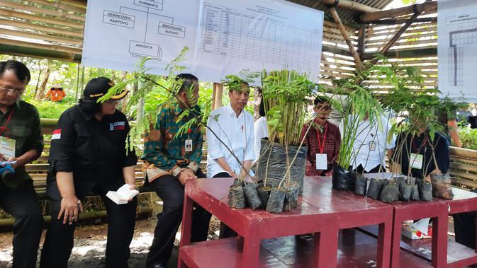 Presiden Joko Widodo atau Jokowi dan Iriana menanam bibit vetiver di Desa Jatisari Kabupaten Wonogiri, Jawa Tengah, Sabtu (15/2/2020).(Liputan6.com/ Lizsa Egeham)