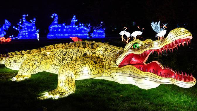 Gambar pada 15 November 2019 menunjukkan patung buaya raksasa diterangi lampu berwarna sebagai bagian dari pameran festival cahaya di Kebun Binatang Jardin des Plantes, Paris. Festival Cahaya bertajuk
