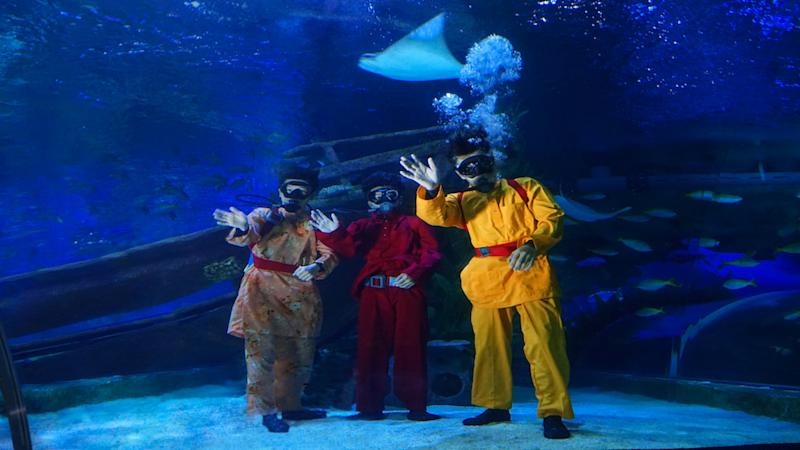 Catch sight of the flying rays, sand tiger sharks, and green sea turtles during the feeding sessions at the Aquatheatre. — Picture courtesy of Aquaria KLCC