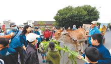 彰化海牛文化節 親子餵草好新鮮