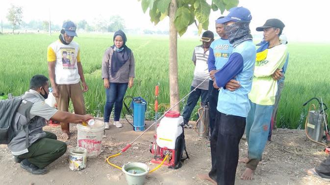 Kementerian Pertanian sangat fokus pada peningkatan produksi padi di Karawang, Jawa Barat. Dok Kementan