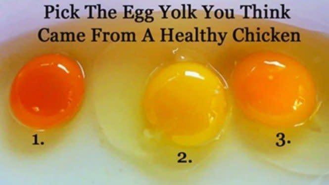 Tebak, Telur Mana yang Berasal dari Ayam yang Sehat?