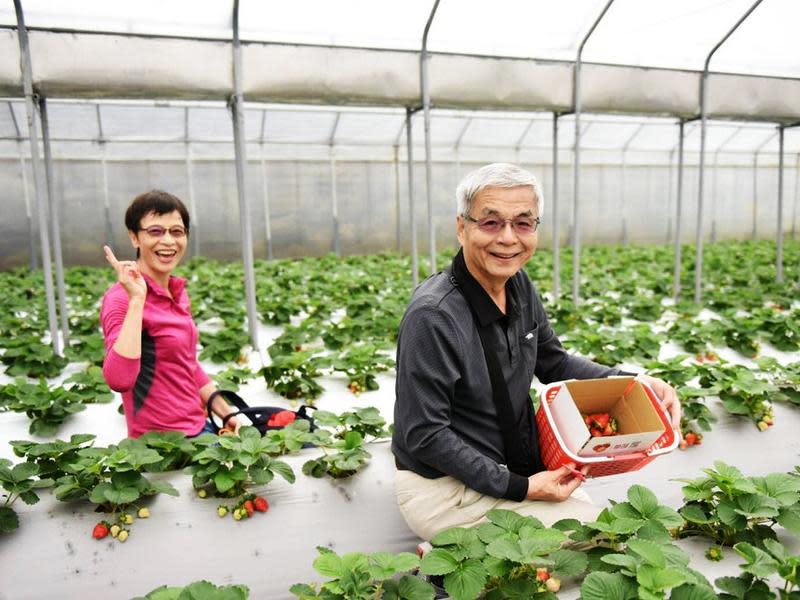 內湖草莓園分布三地點
