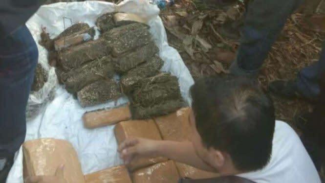 Polisi Gagalkan Peredaran Ganja Ratusan Kg di Banten