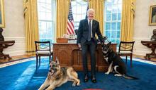 咬傷白宮特勤人員 拜登飼養的「第一寵物」被趕回老家