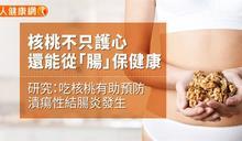核桃不只護心 還能從「腸」保健康!研究:吃核桃有助預防潰瘍性結腸炎發生