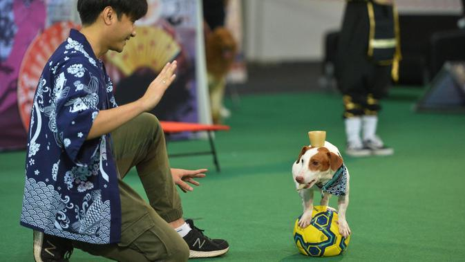Seekor anjing menunjukkan kemampuannya menjaga keseimbangan pada Pameran Hewan Peliharaan Thailand 2020 di Bangkok International Trade and Exhibition Center (BITEC), Bangkok, Thailand, 3 September 2020. Ajang yang digelar empat hari itu akan berlangsung hingga 6 September. (Xinhua/Rachen Sageamsak)