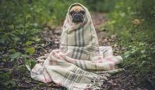 為何人要給狗狗穿衣服?網一句破真相