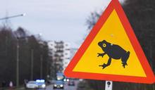 小心青蛙!愛沙尼亞首都為保護牠們 道路全面清空封閉