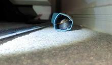嚇死人!劇毒紅腹黑蛇現身嚇壞10歲女孩 最後藏身哮喘吸入器