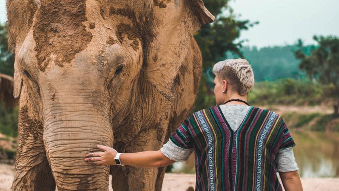 Gajah di Thailand (unsplash.com/Trinity Treft)