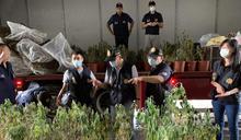 檢警破獲大麻植栽園 (圖)