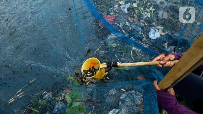 Warga memindahkan ikan betik yang terperangkap dalam perangkap ikan tradisional atau anco di Kali Doser, Desa Wates, Bekasi, Jawa Barat, Selasa (21/1/2020). Selain untuk makan, ikan betik yang didapat warga juga digunakan untuk membuat terasi. (merdeka.com/Imam Buhori)