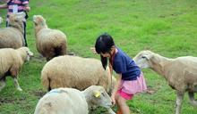 剃毛秀「有沒有問羊?」 馮世寬:羊被弄完秒覓食,可見牠很喜歡