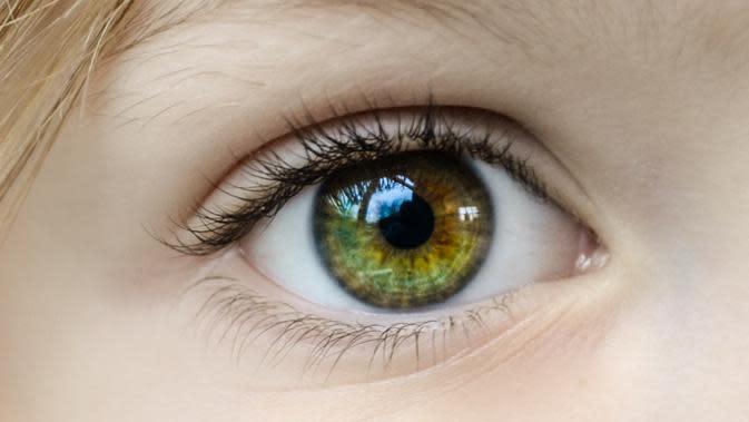 Mengenal Trakoma dan Glaukoma Sebagai Penyebab Disabilitas Netra