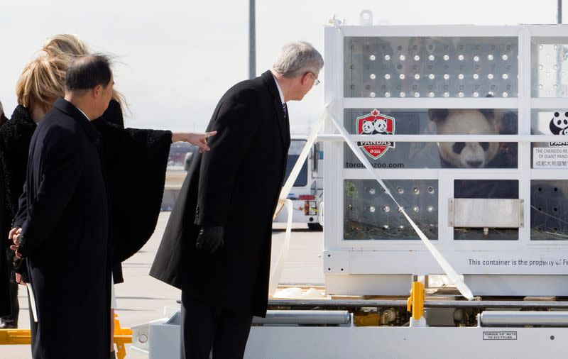 FILE PHOTO: Prime Minister Stephen Harper looks at one of two panda bears that arrived in Toronto