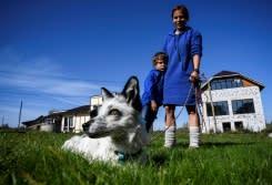 Ilmuwan Siberia membiakkan rubah mata manusia untuk hewan peliharaan