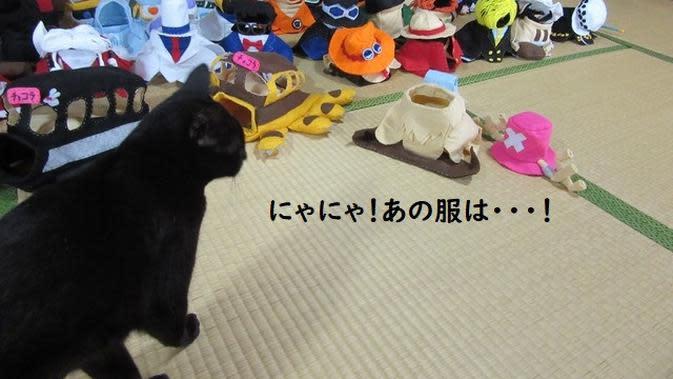 Chocola, kucing cosplayer di Jepang yang punya lebih dari 100 kostum unik. (dok. Twitter/@kigurumicyokor1/https://twitter.com/kigurumicyokor1/status/1264163502056280064/photo/1)
