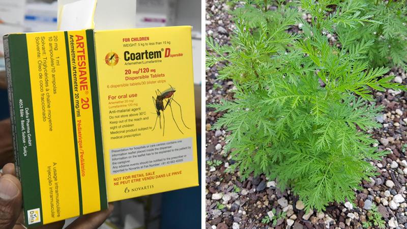 Obat malaria dan tanaman artemisia
