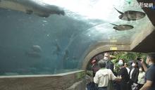 賀瑞普參訪動物園 借殖2隻穿山甲