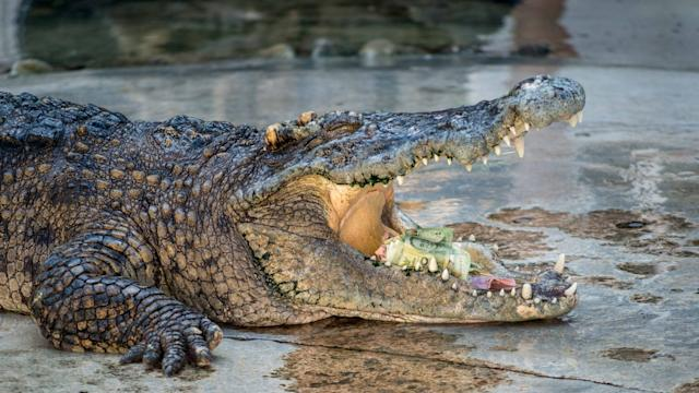 Das etwa 1,5 Meter lange und rund 15 Kilogramm schwere Krokodil gehörte zur seltenen Art der Philippinen-Krokodile.