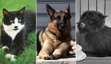 美國大選:拜登的寵物犬「冠軍」和「少校」,以及白宮內曾經的寵物