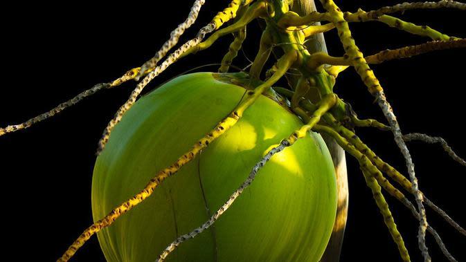 Ilustrasi kelapa. (dok. Josch13/Pixabay/Tri Ayu Lutfiani)