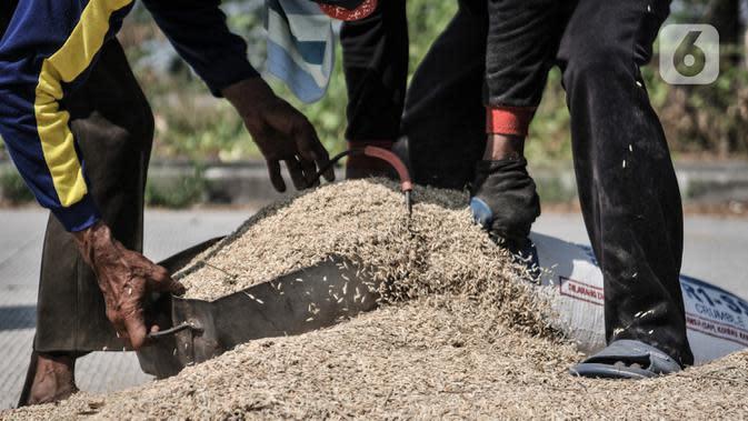 Petani memasukkan padi ke dalam karung usai dijemur di persawahan kawasan Rorotan, Jakarta, Rabu (29/7/2020). Cadangan beras pemerintah (CBP) diprediksi mampu untuk memenuhi kebutuhan beras dalam negeri di tengah pandemi Covid-19, bahkan hingga akhir tahun 2020. (merdeka.com/Iqbal S. Nugroho)