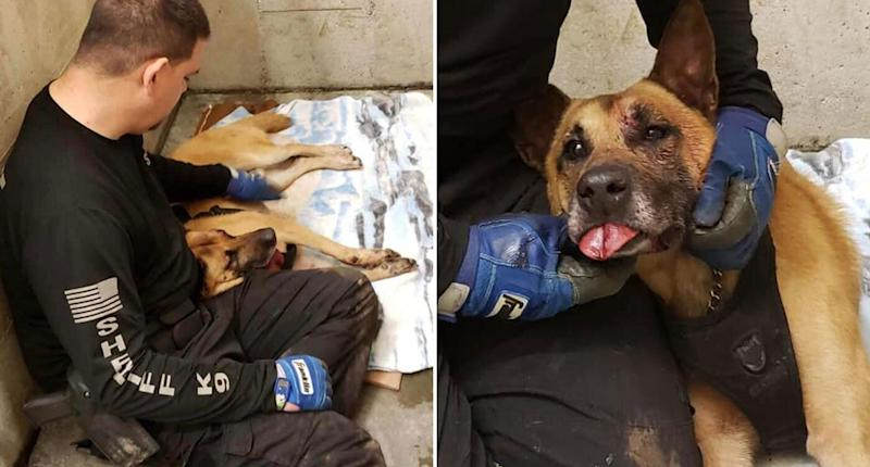 Odin during his recovery. Source: Facebook/ Coos County Sheriff's Office