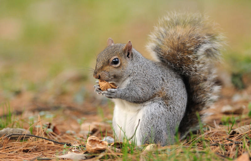 A man has died of a rare disease after eating squirrel brains likened to mad cow disease.