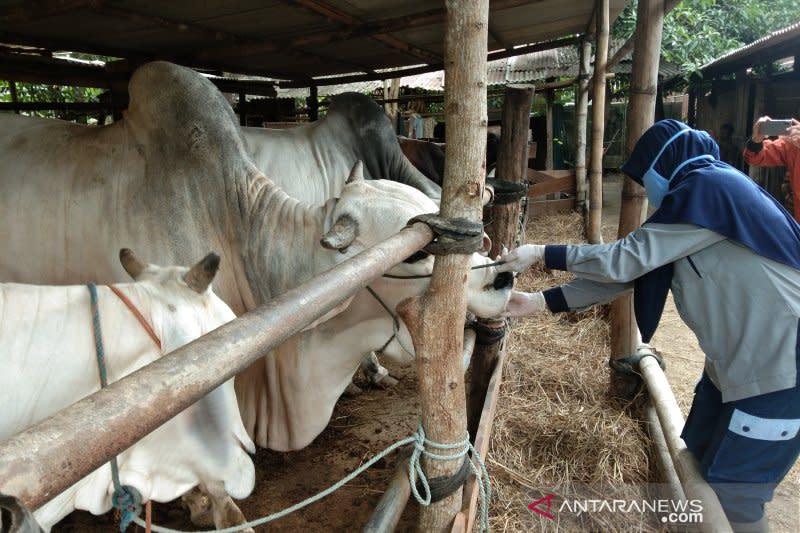 Kementan catat stok hewan kurban lokal mampu penuhi permintaan