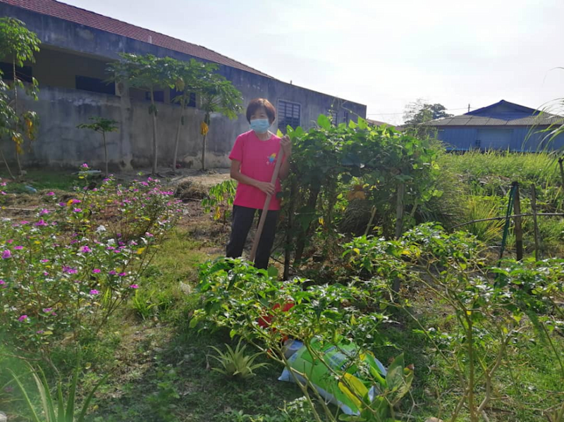 The Perak state government lauded housewife SH Chin's effort to turn an empty plot of land in front her house into a vegetable farm and now encourages others to follow Chin's footsteps. — Picture by Sylvia Looi