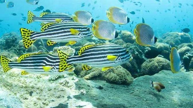 Wisata bawah laut bunaken