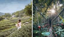 無盡茶園綿延至遠山!自然系解憂秘境就在台北