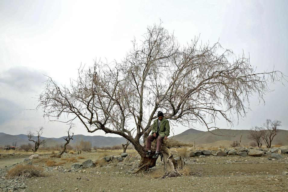 In this Sunday, Feb. 16, 2014 photo, Reza, an Iranian gardener, sits on a dry tree near Lake Oroumieh, northwestern Iran. Oroumieh, one of the biggest saltwater lakes on Earth, has shrunk more than 80 percent to 1,000 square kilometers (nearly 400 square miles) in the past decade, mainly because of climate change, expanded irrigation for surrounding farms and the damming of rivers that feed the body of water, experts say. (AP Photo/Ebrahim Noroozi)