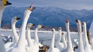 【新潟自由行】 越後雪國魅力無限 冬日必玩行程看這裡
