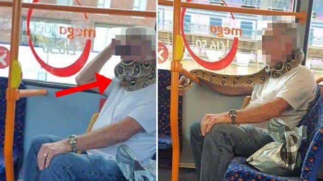 Pria gunakan ular piton sebagai masker
