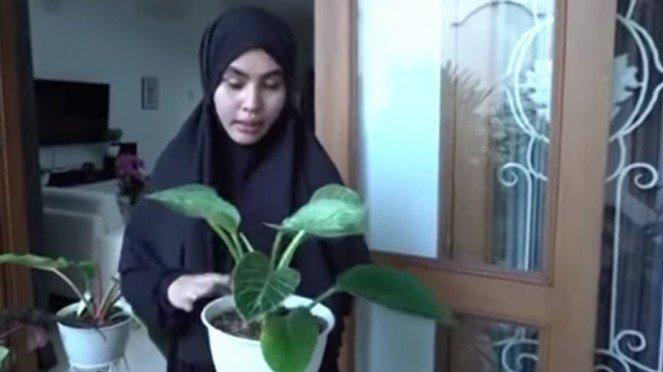 Kartika Putri dan koleksi tanaman mahalnya