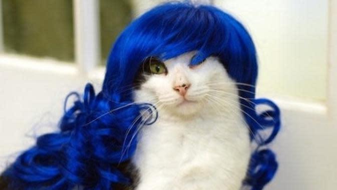 Potret Kucing saat Memakai Wig ini sukses Bikin Gemes (sumber:steemkr.com)