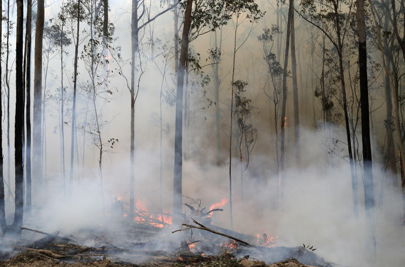 Flames from a controlled fire burn around trees as firefighters work at building a containment line at a wildfire near Bodalla, Australia, Sunday, Jan. 12, 2020. Authorities are using relatively benign conditions forecast in southeast Australia for a week or more to consolidate containment lines around scores of fires that are likely to burn for weeks without heavy rainfall. (AP Photo/Rick Rycroft)