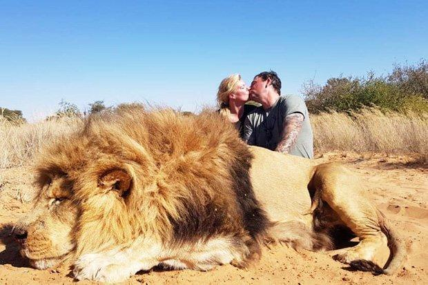 Darren and Carolyn Carter kiss behind a fully grown male lion they have shot and killed hunting with Legelela Safaris in South Africa.