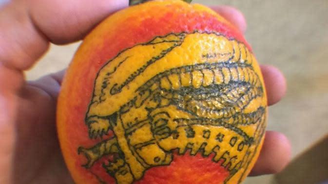 Tato pada buah jeruk (Sumber: Brainberries)