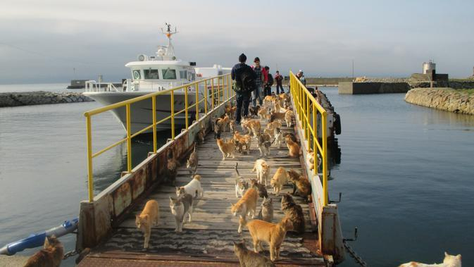 Kucing-kucing di Pulau Aoshima Jepang. (dok. foto KAZUYUKI ONO / AFP)