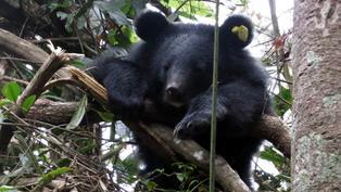 擁有最多代言 全台最紅 台灣黑熊依舊40拉警報|2020年度回顧專題