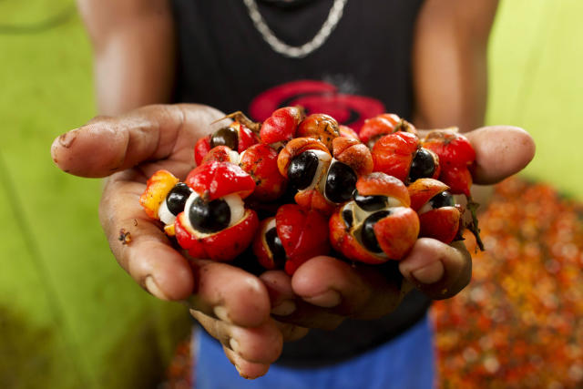 A handful of guarana berries, which many people have noted look a lot like eyes. (Bruno Kelly / Reuters)